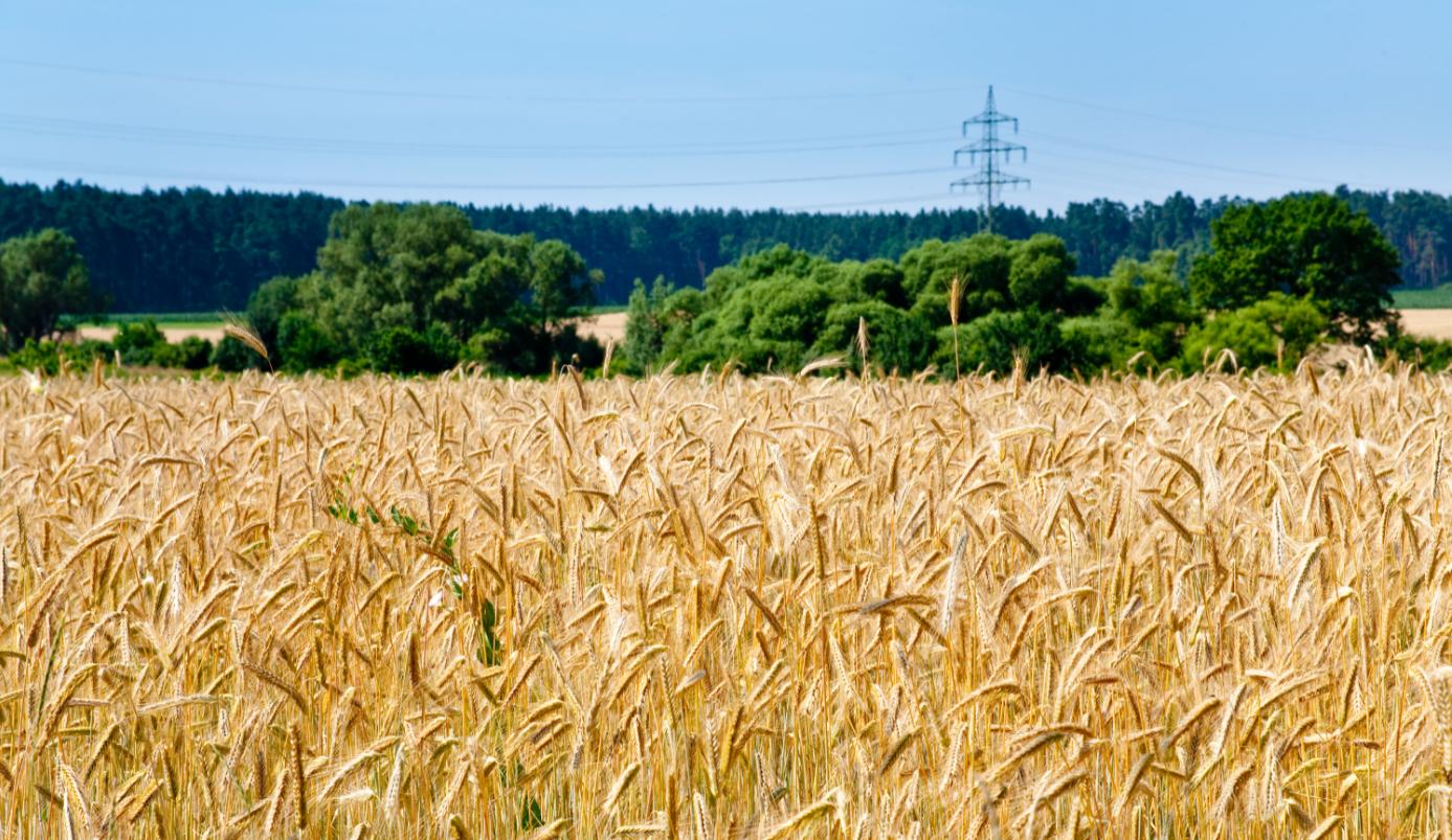 Her kan du læse om Venstres miljøpolitik og fødevarepolitik.