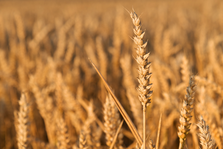 Venstres fødevarepolitik har fokus på at skabe bedre forhold for fødevareproducenter.