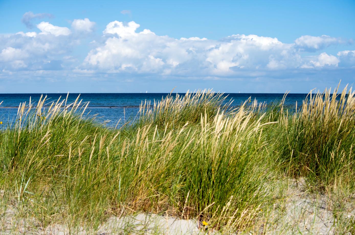 Venstre vil sikre god mobilitet og muligheder for landdistrikter og de danske øer.